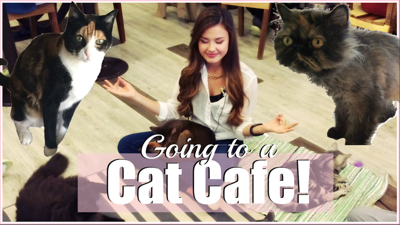 VISITING THE CAT'S ATTIC CAT CAFE IN SEOUL, KOREA THE TRAVEL BREAKDOWN