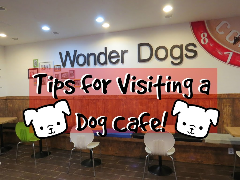Tips for Visiting a Dog Cafe in Seoul, Korea | The Travel Breakdown